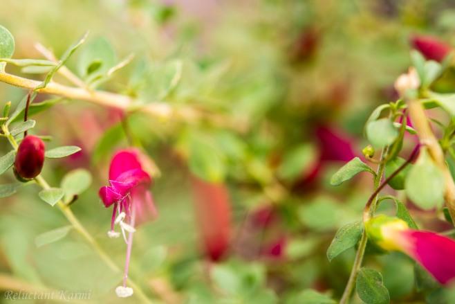 At the healing garden (St Josephs Hospital, Phoenix)